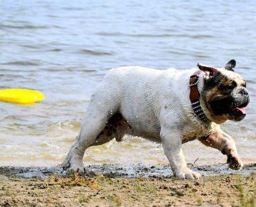 La Dog Beach Di San Vincenzo